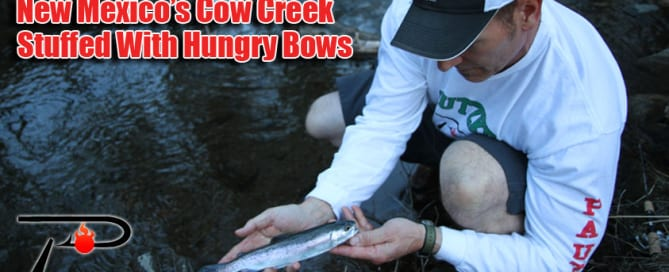 Cow-Creek-Blog