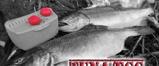 Duane-Tuna-Egg-Blog-lead-pi