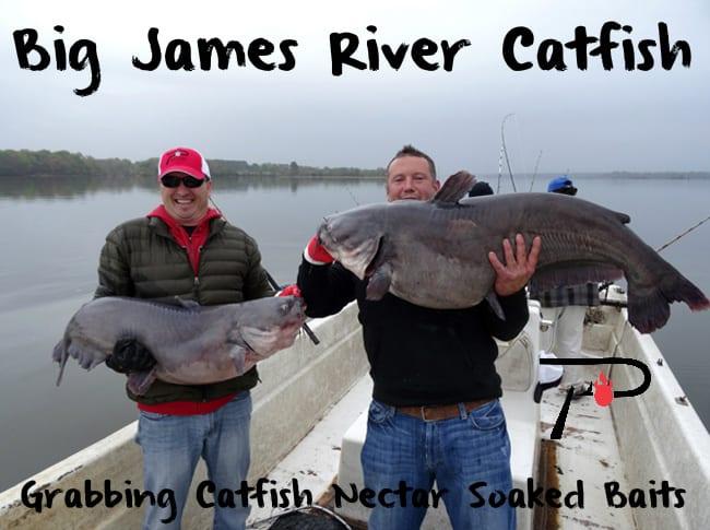 James river catfish grabbing catfish nectar soaked baits for James river fishing