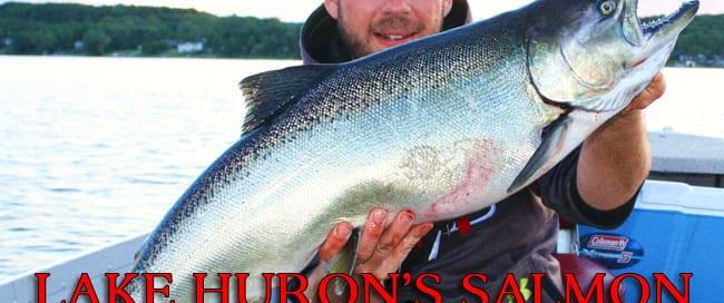 LH-Salmon-Rebound