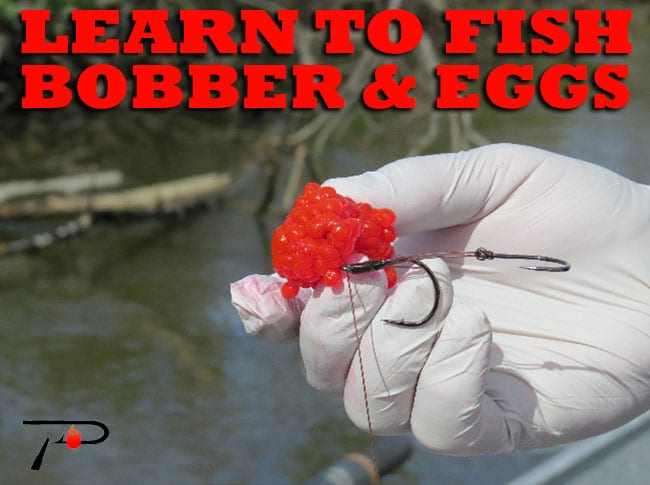 Learn to fish bobber eggs pautzke bait co for Best bait for salmon fishing in the river