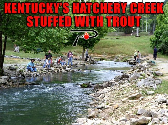 kentucky's hatchery creek stuffed with trout – pautzke bait co, Fly Fishing Bait