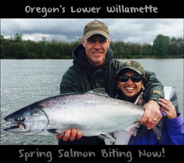 Spring Chinook Salmon Biting on Oregon's Lower Willamette | Oregon Fishing Guides