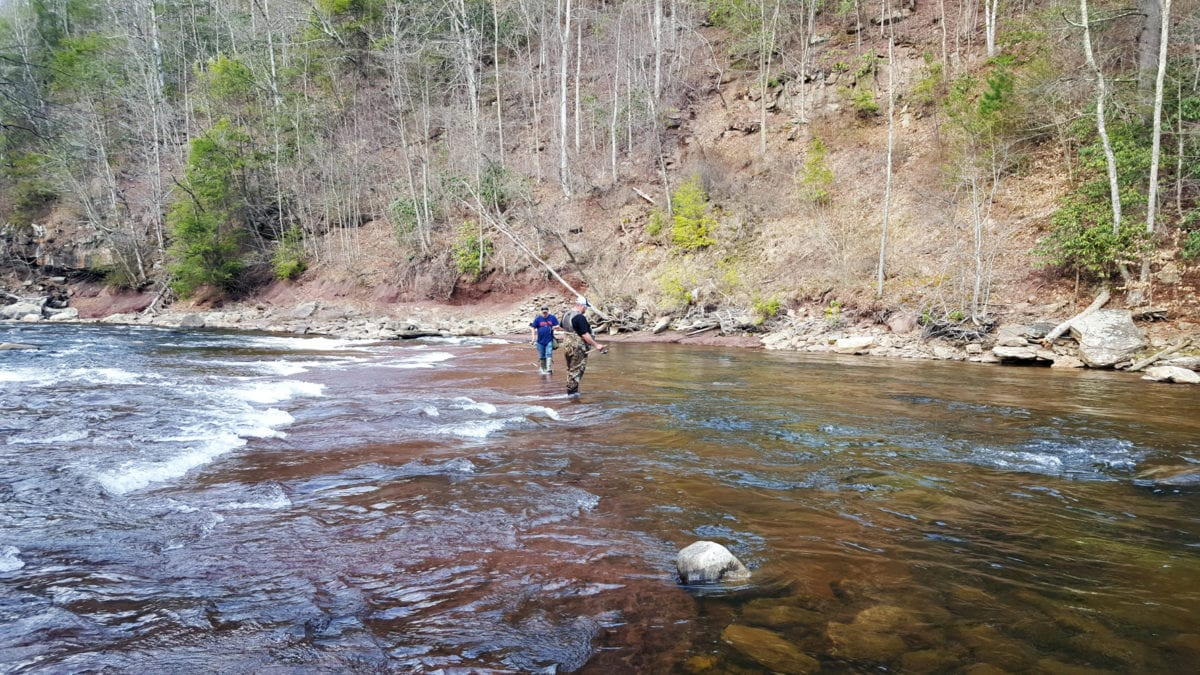 West virginia s shavers fork getting trout weekly for Trout fishing in wv