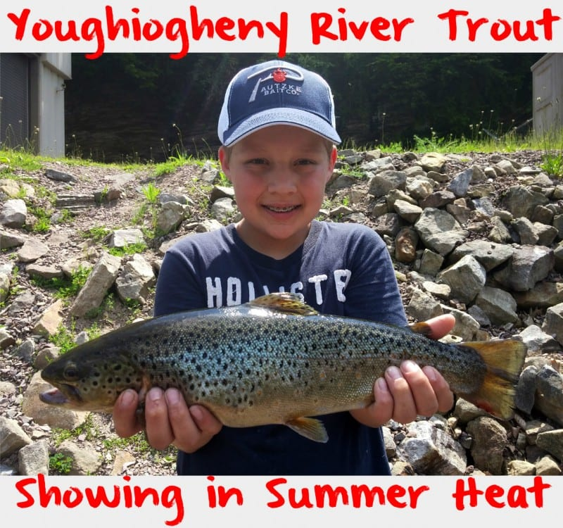 Youghiogheny river trout showing in summer heat pautzke for Youghiogheny river fishing