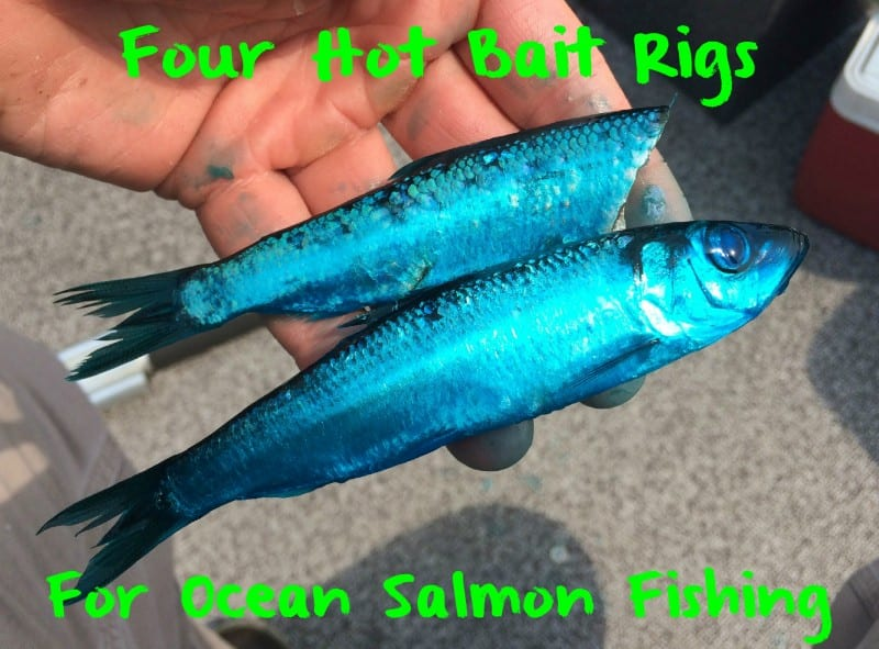 Four hot bait trolling rigs for ocean salmon fishing for Salmon fishing lures