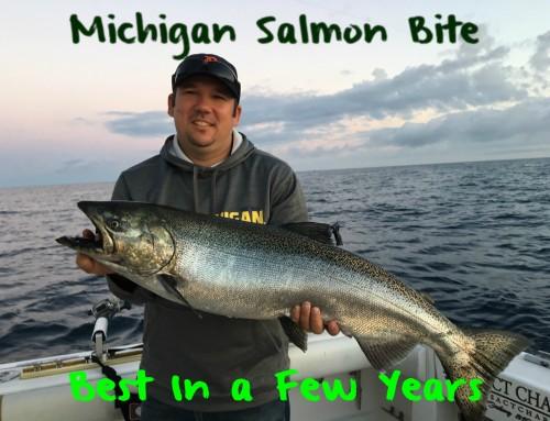 Michigan Salmon Bite Best In A Few Years