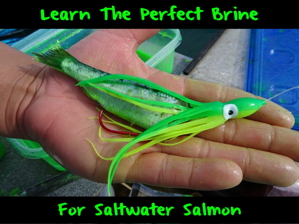 how to cook saltwater salmon