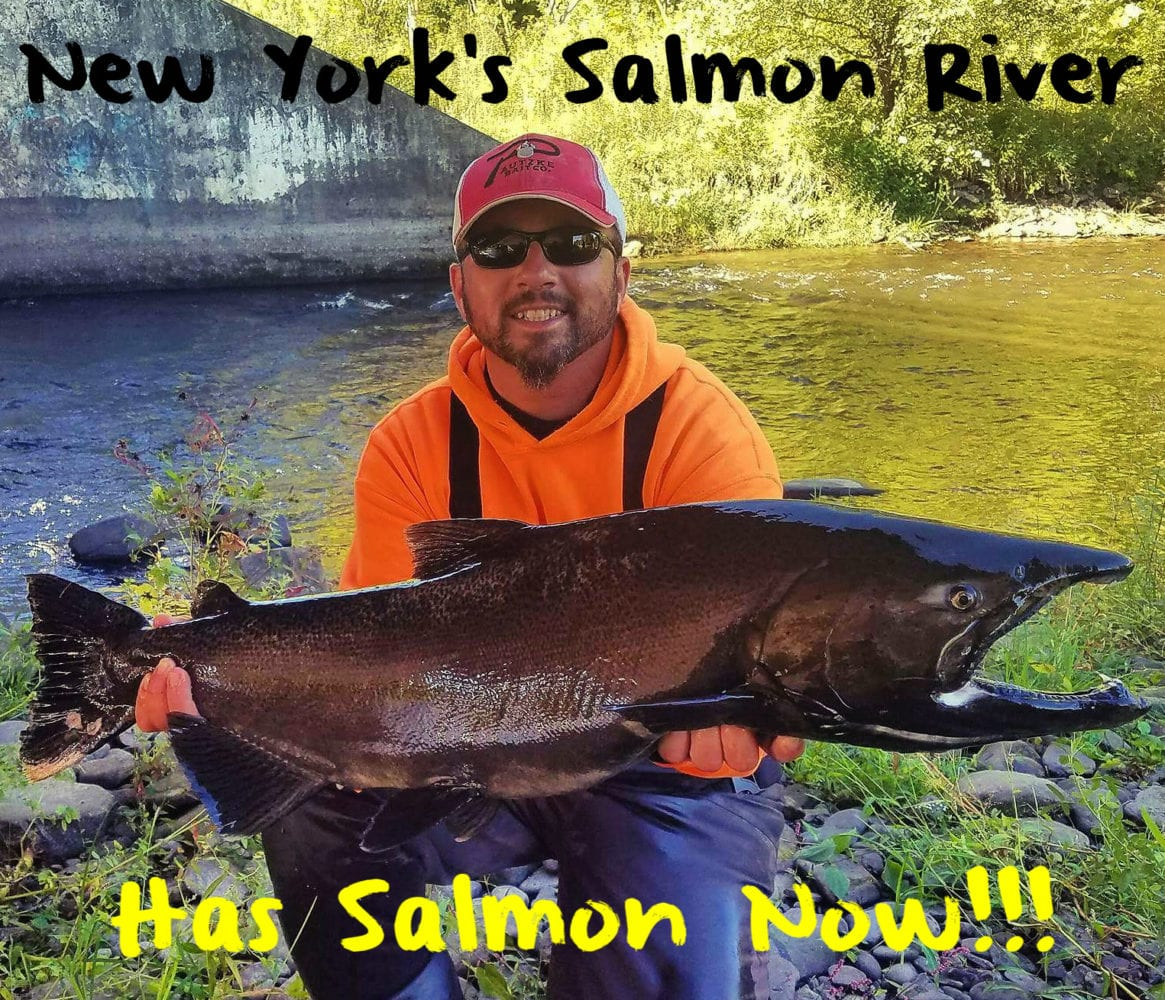 New York's Salmon River Has Salmon Now! – Pautzke Bait Co