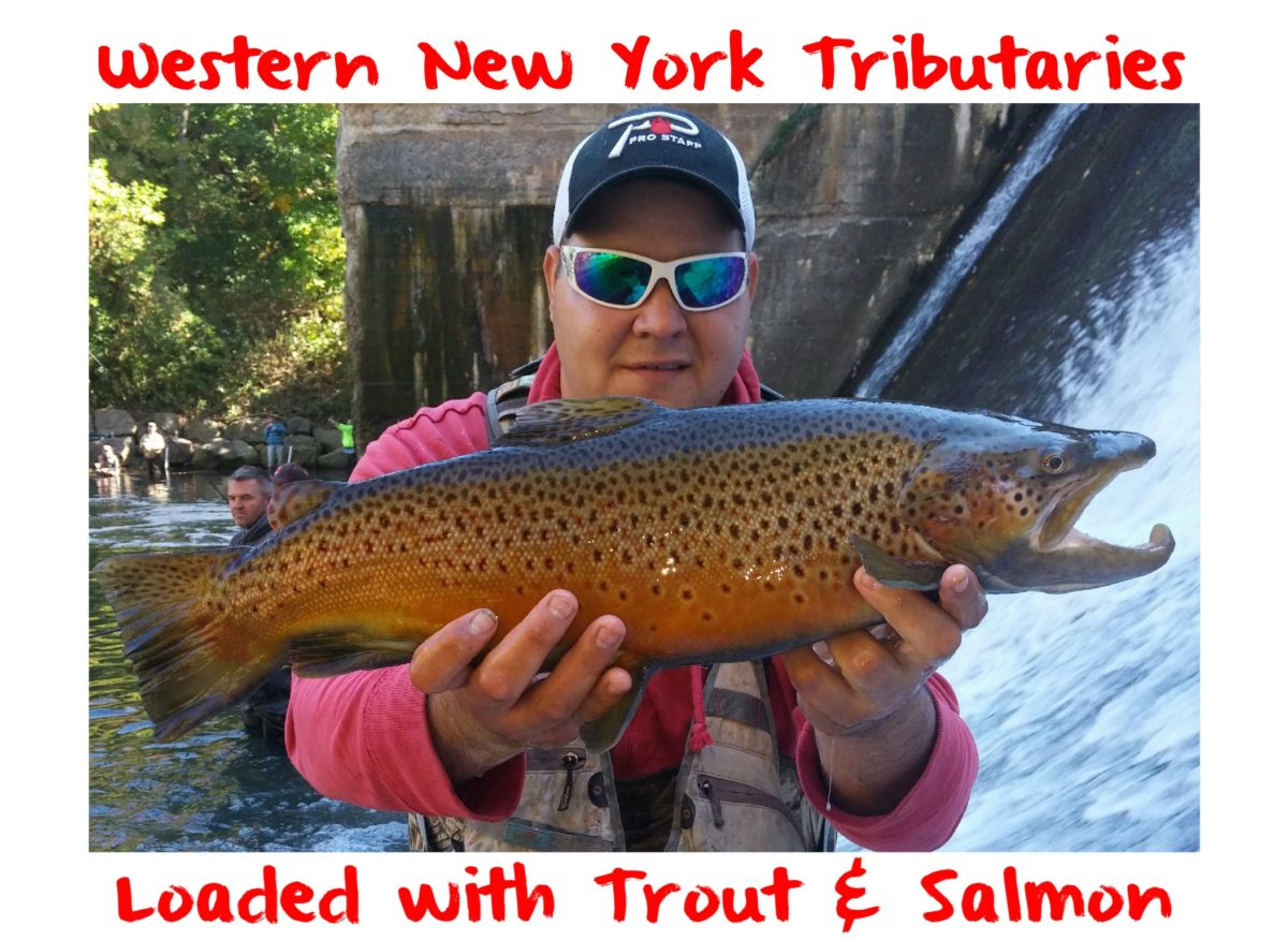 Western new york tributaries loaded with trout salmon for Salmon fishing new york