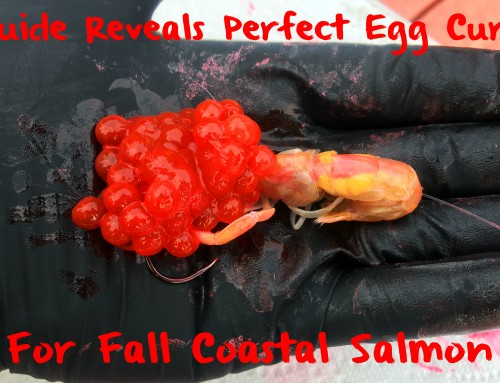 Guide Reveals Perfect Egg Cure For Coastal Fall Salmon