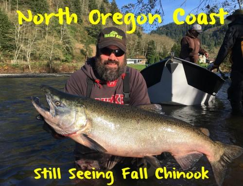 North Oregon Coast Still Seeing Fall Chinook