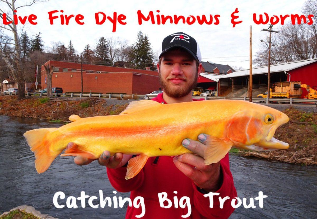 live fire dye minnows & worms catching big trout – pautzke bait co, Fly Fishing Bait