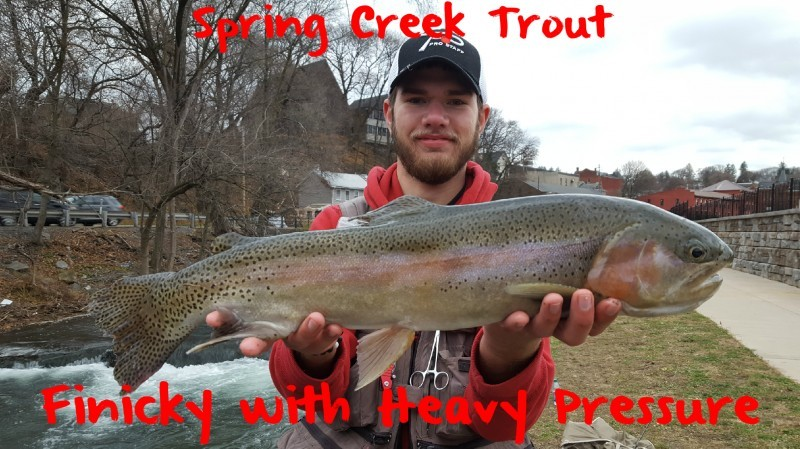 Spring creek trout finicky with heavy pressure pautzke for Spring creek pa fishing report