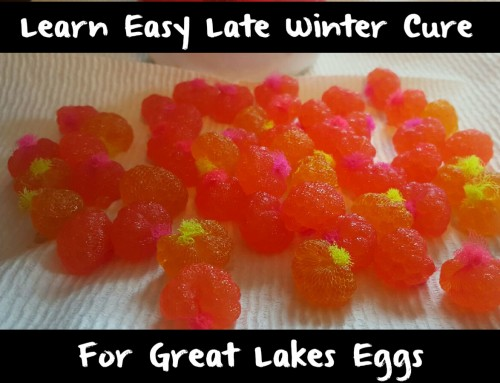 Learn Easy Late Winter Cure For Trout & Steelhead Eggs