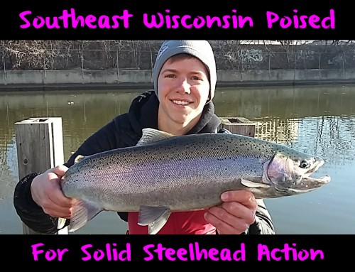 Southeast Wisconsin Poised For Solid Steelhead Action