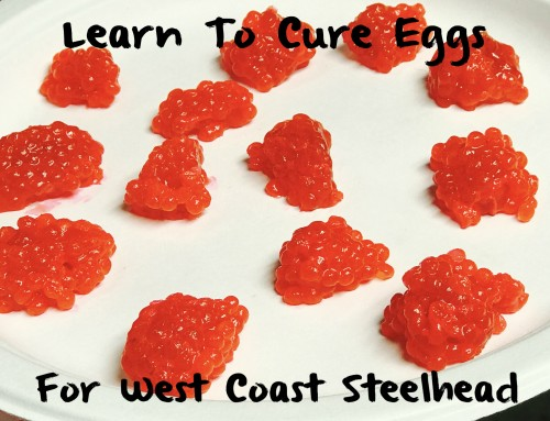 Learn to Cure Eggs For West Coast Steelhead