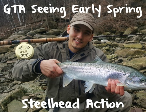 GTA Seeing Early Spring Steelhead Action