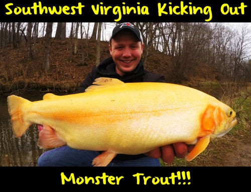 Southwest Virginia Kicking Out Monster Trout