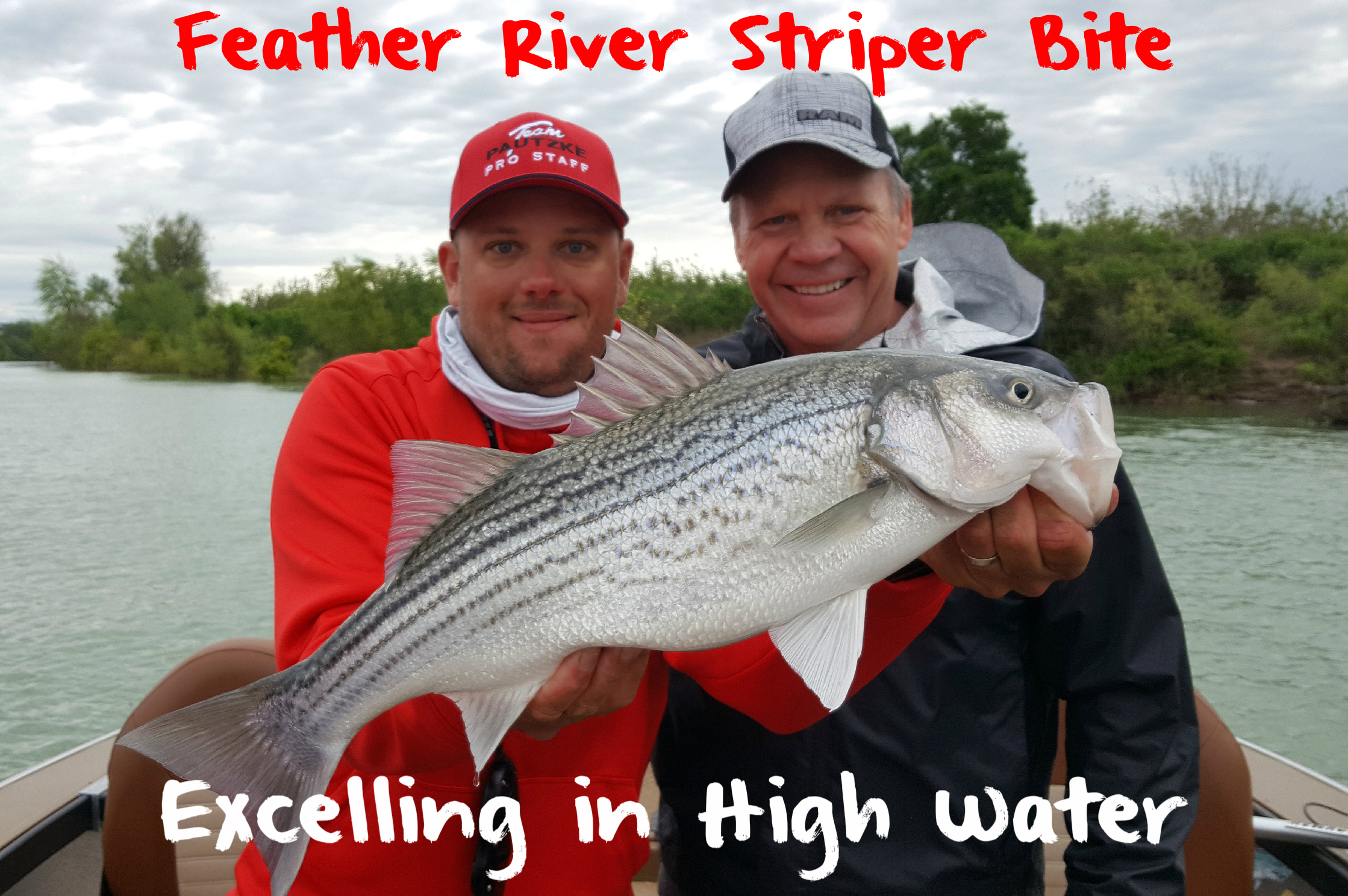 Feather River Striper Bite Excelling in High Water – Pautzke Bait Co