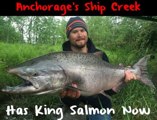 Anchorage's Ship Creek Has Salmon Now