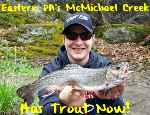 Eastern PA's McMichael Creek Has Trout Now