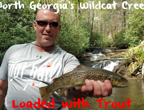 Georgia's Wildcat Creek Loaded with Trout