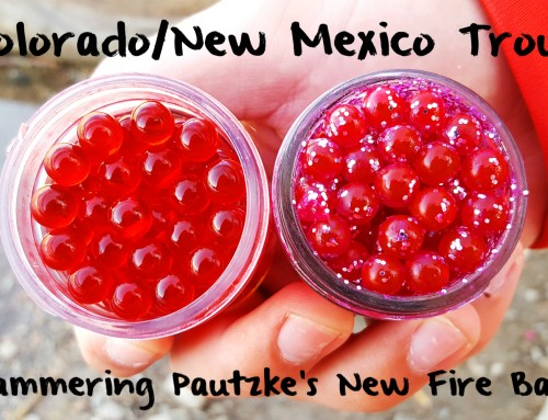 New Mexico/Colorado Trout Hammering Pautzke's New Fire Balls