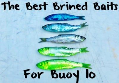 buoy10baitlead