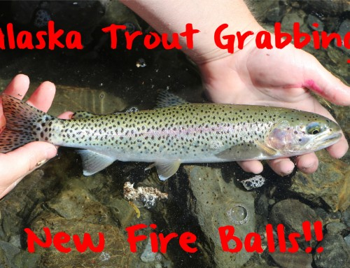 Alaska Trout Grabbing New Fire Balls