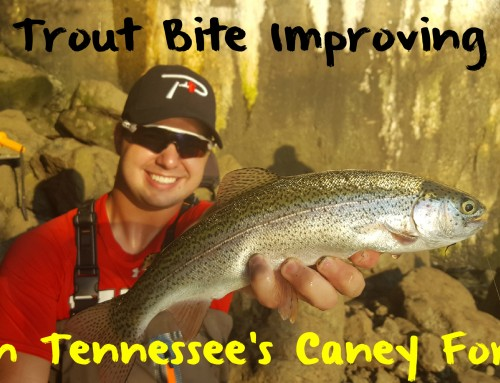 Trout Bite Improving On Tennessee's Caney Fork