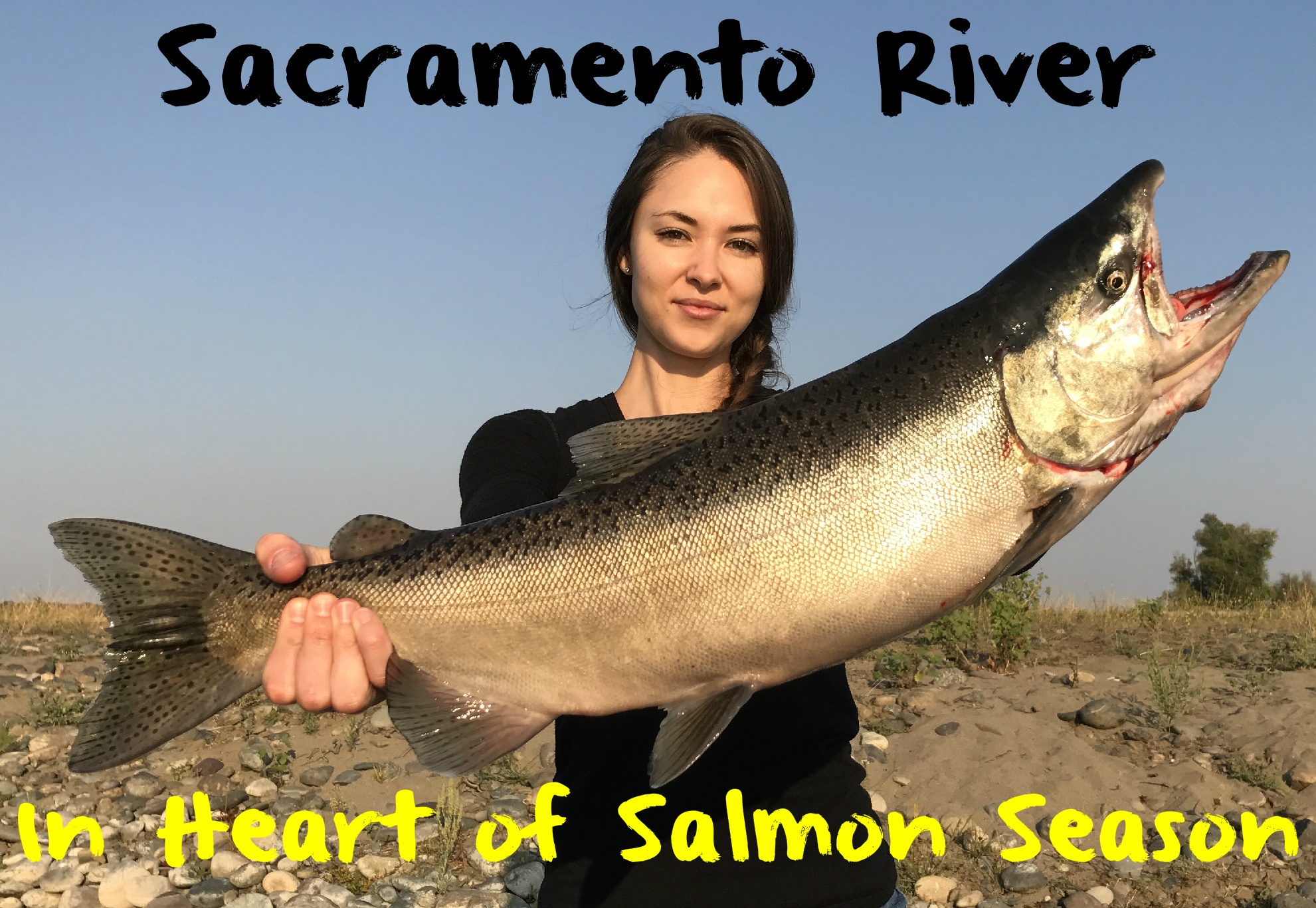 Four hot bait trolling rigs for ocean salmon fishing for Salmon fishing sacramento river