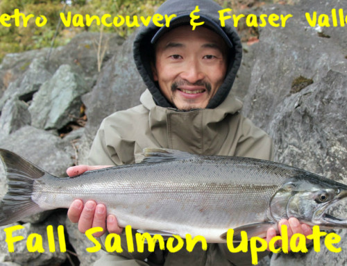 Vancouver and Fraser Valley Fall Salmon Update