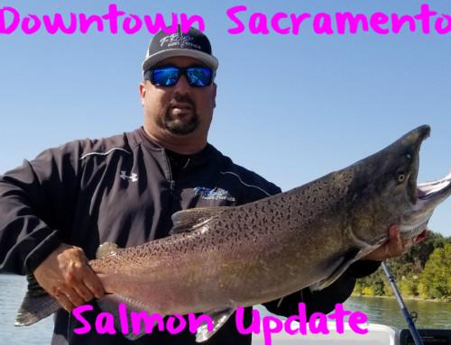 Downtown Sacramento Salmon Update