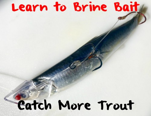 Learn to Brine Cut Bait: Catch More Trout