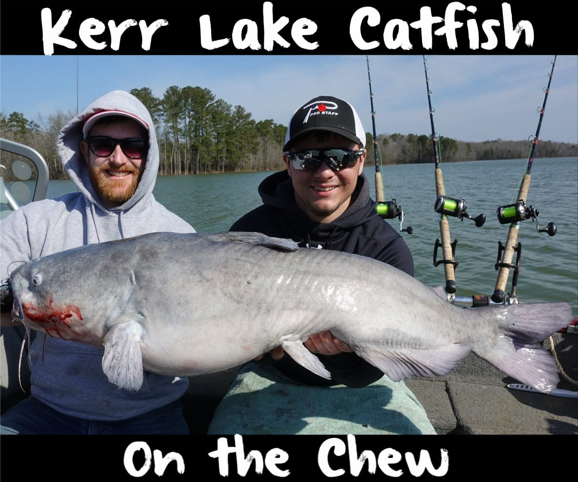 North carolina virginia border cats feeding in shallow for Kerr lake fishing hot spots