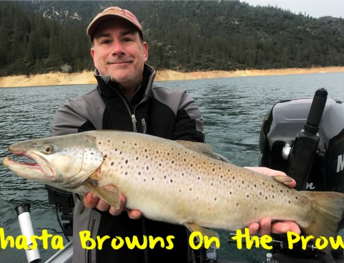 Shasta Browns On the Prowl