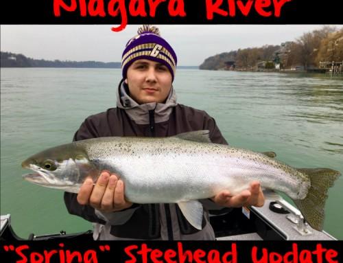 "Niagara River ""Spring"" Steelhead Update"