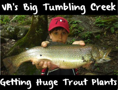 VA's Big Tumbling Creek Getting Huge Trout Plants
