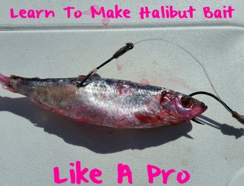 Learn To Make Halibut Bait Like A Pro
