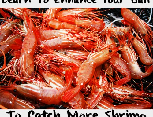 Learn To Enhance Your Bait To Catch More Shrimp