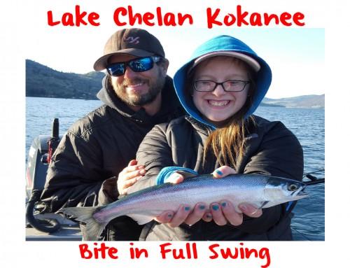 Lake Chelan Kokanee In Full Swing