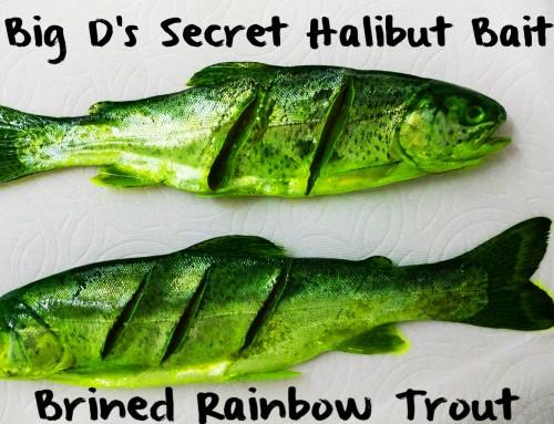 Big D's Secret Halibut Bait: Brined Rainbow Trout