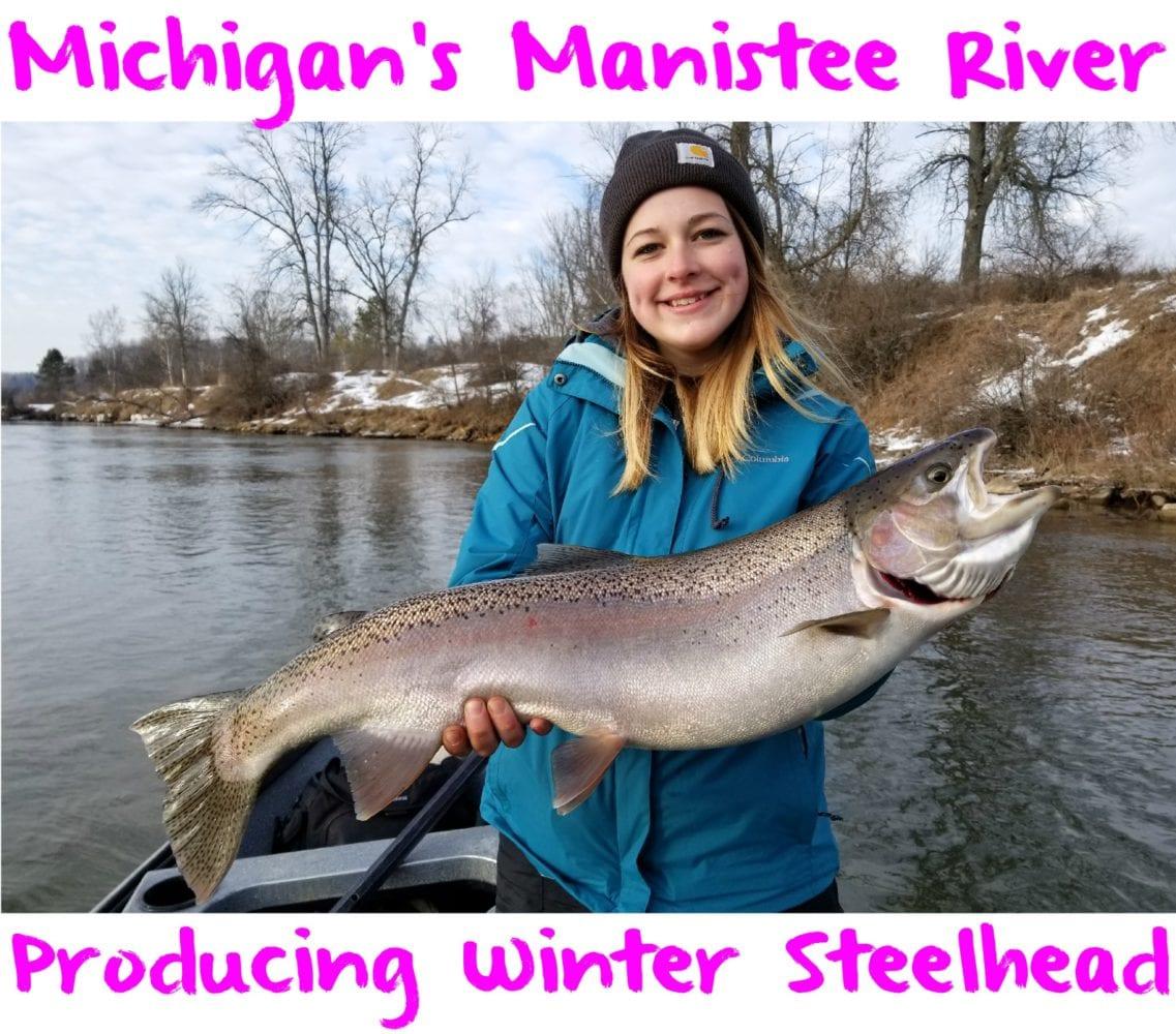 Michigan's Manistee River Producing Winter Steelhead
