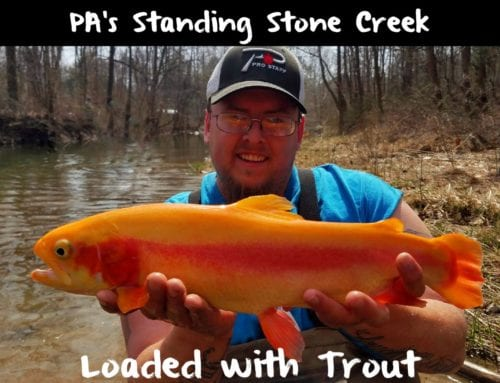 PA's Standing Stone Creek: Loaded with Trout