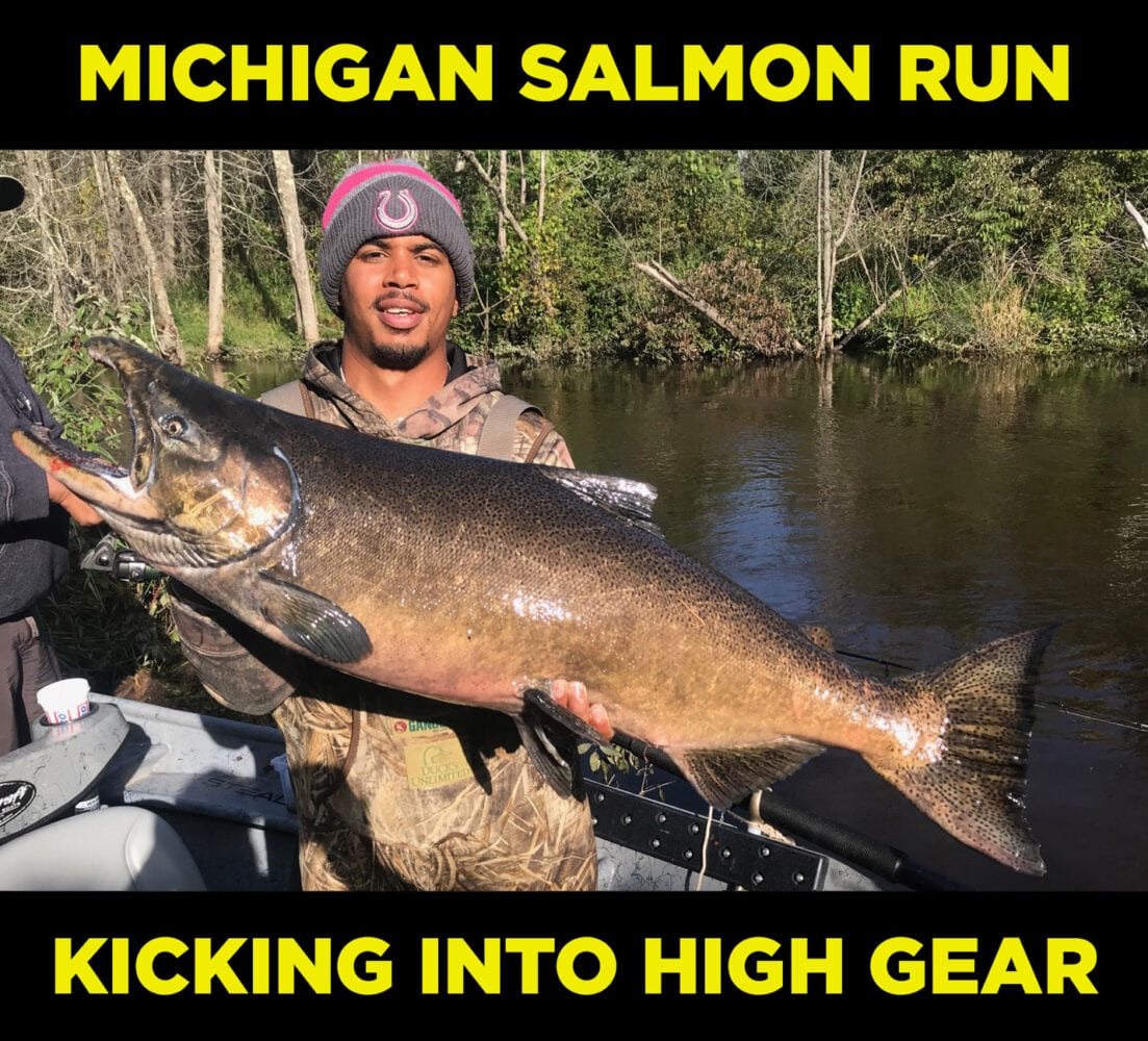 Michigan Salmon Run Kicking into High Gear – Pautzke Bait Co