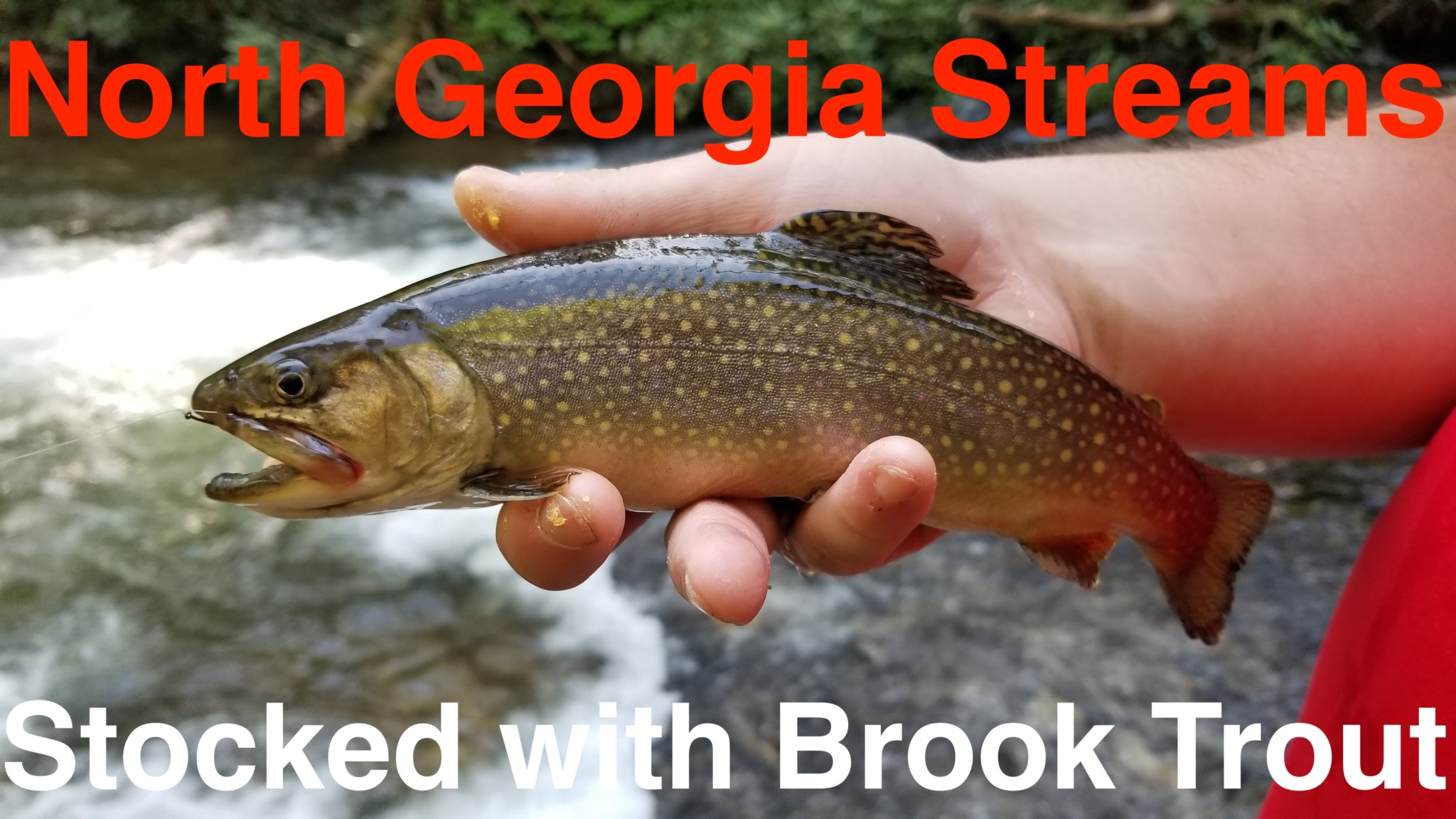 North Georgia Streams Stocked with Brook Trout – Pautzke Bait Co